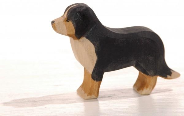 Berner-Sennehund-Ostheimer-verneuer-shop.jpg